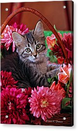 Pele In The Flowers Acrylic Print by Kenny Francis