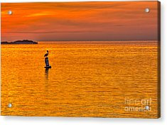 Pelican On A Buoy Acrylic Print by Marvin Spates