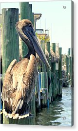 Pelican On A Post Acrylic Print by Dorothy Menera