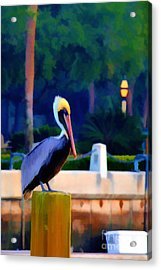 Pelican On Post Artistic Acrylic Print by Dan Friend