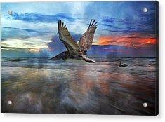 Pelican Sunrise Acrylic Print by Betsy C Knapp