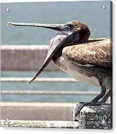 Pelican Yawn - Digital Painting Acrylic Print by Carol Groenen