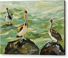 Pelicans By Julianne Felton 9-30-13 Acrylic Print by Julianne Felton