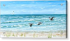 Pelicans On Crescent Beach Acrylic Print by Bruce Alan