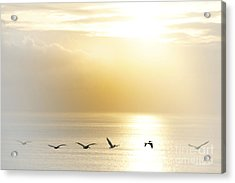 Pelicans Over Malibu Beach California Acrylic Print by Artist and Photographer Laura Wrede
