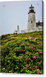 Pemaquid Point Acrylic Print by Karol Livote