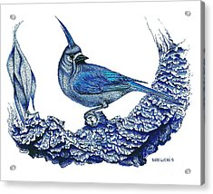 Pen And Ink Drawing Of Small Blue Bird  Acrylic Print by Mario Perez
