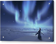 Penguin Dreams Acrylic Print by Cassiopeia Art
