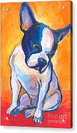 Pensive Boston Terrier Dog  Acrylic Print by Svetlana Novikova