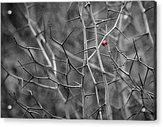 Per Aspera - Featured 3 Acrylic Print by Alexander Senin
