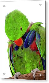 Perfect Bird Acrylic Print by Crystal Wightman