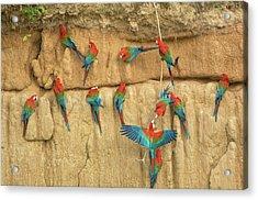 Peru, Amazon River Basin, Madre De Dios Acrylic Print by Jaynes Gallery
