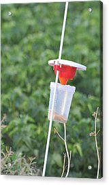 Pest Trap In An Agricultural Field. Acrylic Print by Photostock-israel
