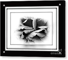 Petals And Shadows 2 Acrylic Print by Kaye Menner