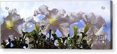 Petunia Sky Acrylic Print by Janice Westerberg