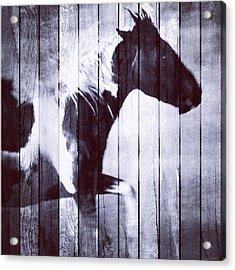 Phantom Stallion Acrylic Print by Patricia Januszkiewicz