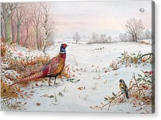 Pheasant And Bramblefinch In The Snow Acrylic Print by Carl Donner