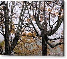 Pheonix In The Fall Acrylic Print by Carolyn Postelwait