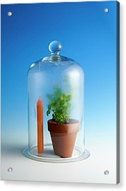 Photosynthesis And Carbon Dioxide Acrylic Print by Science Photo Library