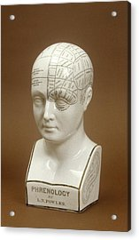 Phrenology Head Acrylic Print by Science Photo Library
