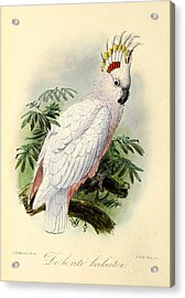 Pied Cockatoo Acrylic Print by J G Keulemans