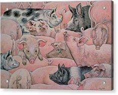 Pig Spread Acrylic Print by Ditz