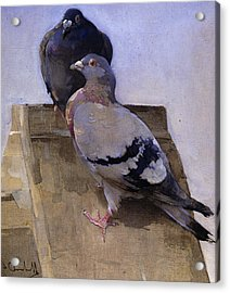 Pigeons On The Roof Acrylic Print by Joseph Crawhall