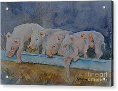 Piglets Acrylic Print by Betty Mulligan