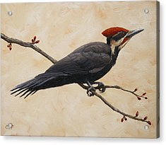 Pileated Woodpecker Acrylic Print by Crista Forest