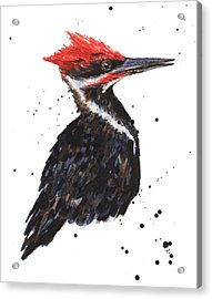 Pileated Woodpecker Watercolor Acrylic Print by Alison Fennell