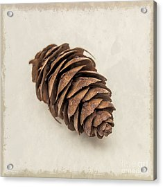 Pine Cone Acrylic Print by Lucid Mood
