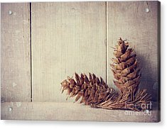 Pine Cones Acrylic Print by Jelena Jovanovic