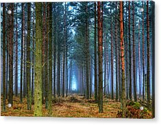 Pine Forest In Morning Fog Acrylic Print by EXparte SE
