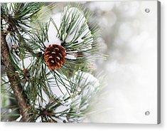 Pine Tree Acrylic Print by Jelena Jovanovic