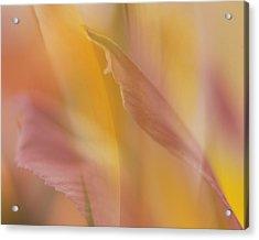 Pink Alstromeria-2 Acrylic Print by Lyn  Perry