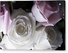 Pink And White Roses Acrylic Print by Jennifer Ancker