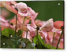 Pink Angels Acrylic Print by Qing