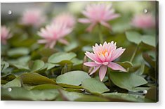 Pink Blossom  Acrylic Print by Joey  Maganini