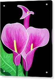 Pink Calla Lillies 2 Acrylic Print by Angelina Vick