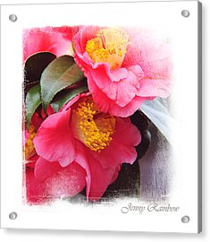 Pink Camellia. Elegant Knickknacks Acrylic Print by Jenny Rainbow