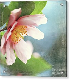 Pink Camellia Acrylic Print by Sylvia Cook