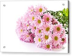 Pink Chrysanthemum Prints Acrylic Print by Boon Mee