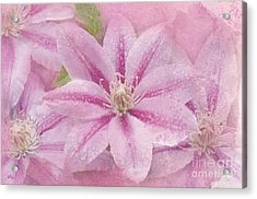Pink Clematis Profusion Acrylic Print by Betty LaRue