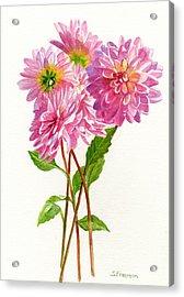 Pink Dahlias Acrylic Print by Sharon Freeman