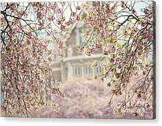 Pink Dream Acrylic Print by Sylvia Cook