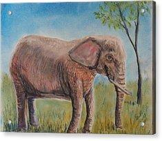 Pink Elephant Acrylic Print by Richard Goohs