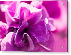 Pink - Featured 3 Acrylic Print by Alexander Senin
