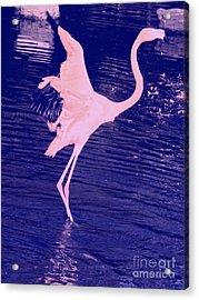 Pink Flamingo Acrylic Print by Avis  Noelle