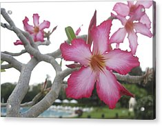 Pink Flower Acrylic Print by Russell Smidt