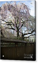 Pink Flowering Tree Acrylic Print by Thanh Tran